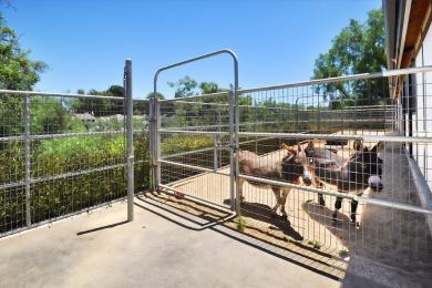 51 Donkeys back of stables